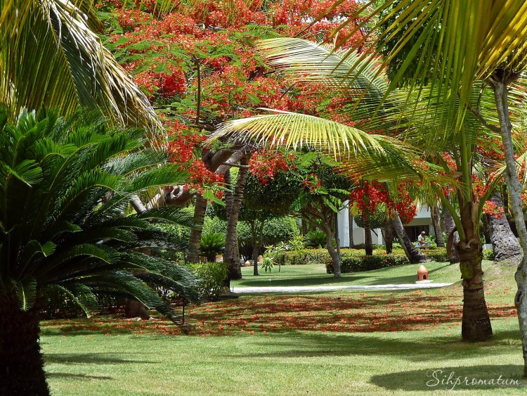 I love paradise. Dominican Republic