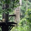 Borneo 051