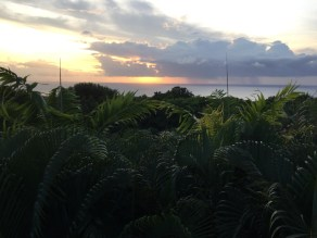 dont-miss-sunset-from-the-treetops-at-bananas