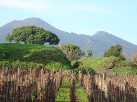 Vineyard at Pompeii