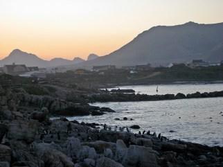 Stony Point penguin colony, South Africa