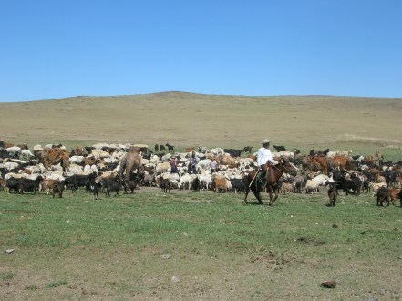 """Baagii then told us a long-held Mongolian saying: """"The more livestock, the better your lifestyle will be."""""""
