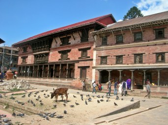 cows in Kathmandu, Nepal. Backpacks and Bra Straps