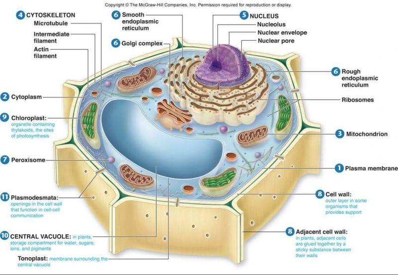 Photo of Sel Tumbuhan dan Fungsinya Lengkap | Penjelasan & Gambar