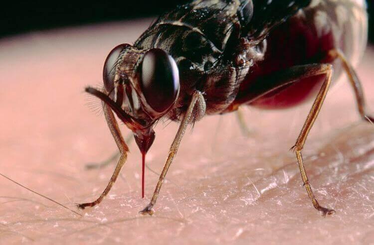 Photo of Cara Mengusir Lalat Secara Alami Dari Rumah Paling Ampuh
