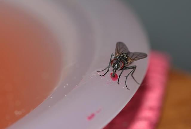Cara Menjauhkan Lalat Dari Rumah