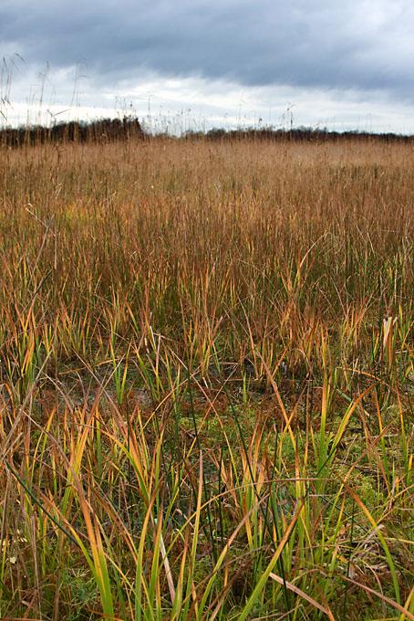 Foto van natuurgebied Naardermeer