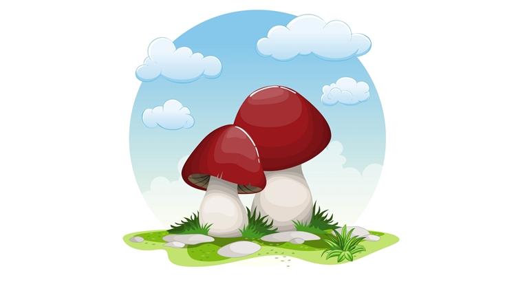 Заговор на сбор грибов