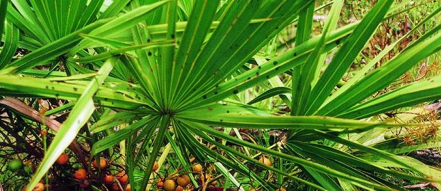 Травы и растения для повышения потенции. Полезные травы для укрепления мужской силы и здоровья