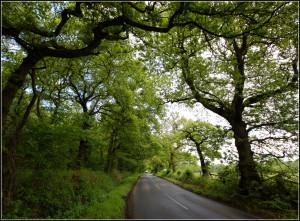 Gate Lane - May Ends