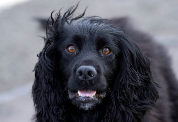 The Benefits of Hearing Dogs