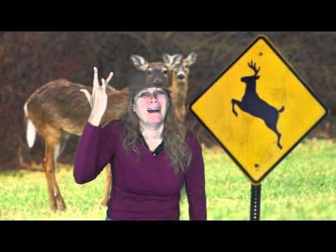 Deer Crossing Lady in ASL – Emilia Wann
