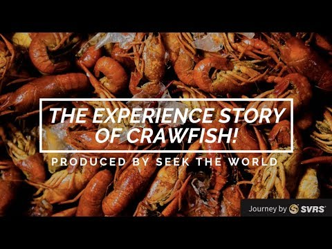 New Orlean: The Crawfish Fishing & Eating Experience!