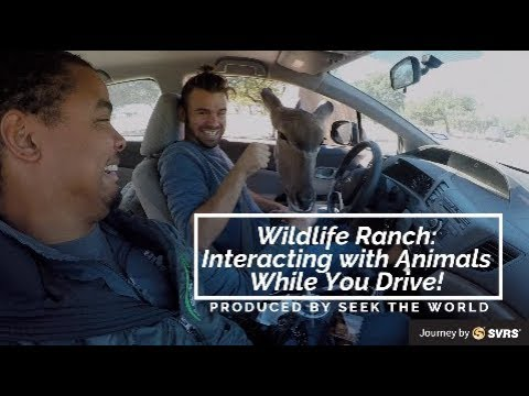 Natural Bridge Wildlife Ranch: Interacting with Animals While You Drive!