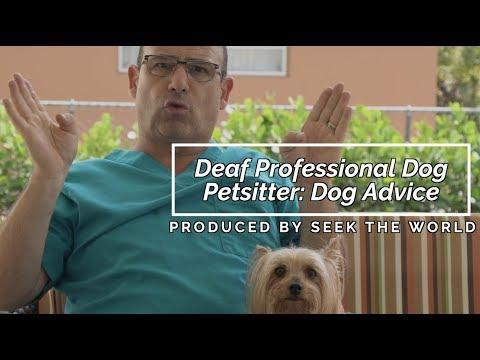 Deaf Professional Dog Petsitter: Sharing The Essential Dog Advice!