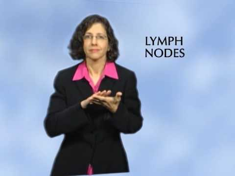 What is the Lymph System?