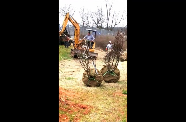 Alder Springs Deaf & Blind Community: Preparing to put in shrubbery and trees