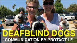 ProTactile - Communicate with DeafBlind Dogs