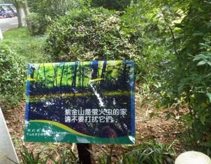 Nanjing firefly preserve 2014