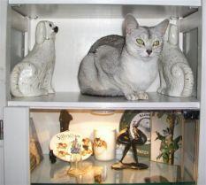 Dzjeedie wist al gauw de weg terug naar de comfortabele plekjes. Dat die hoog in een kast zijn, boven het lampje van het vitrinekastje, is voor haar geen probleem.