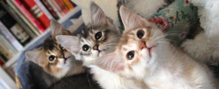 De ontdekking van het kattenparadijs