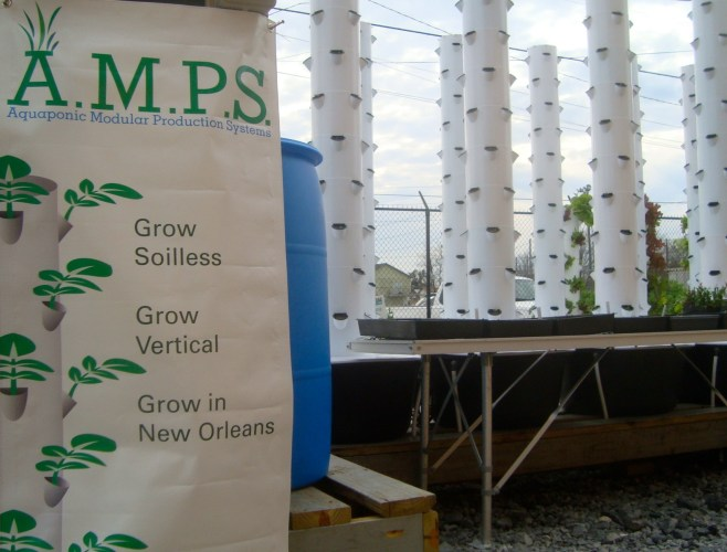 The AMPS installation is already producing greens for sale at the Hollygrove Market. Photo courtesy of Marianne Cufone of the Recirculating Farms Coalition.