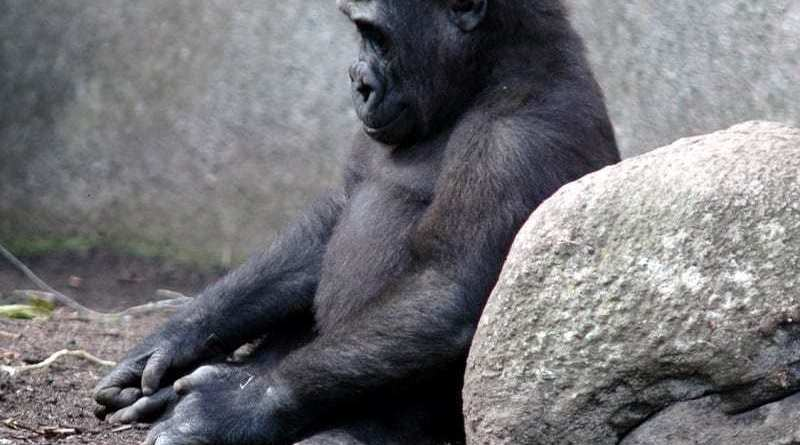 FP sad chimp