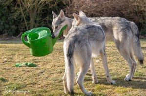 Die jungen Wilden und die Gieskanne – The young savages and the watering can :)