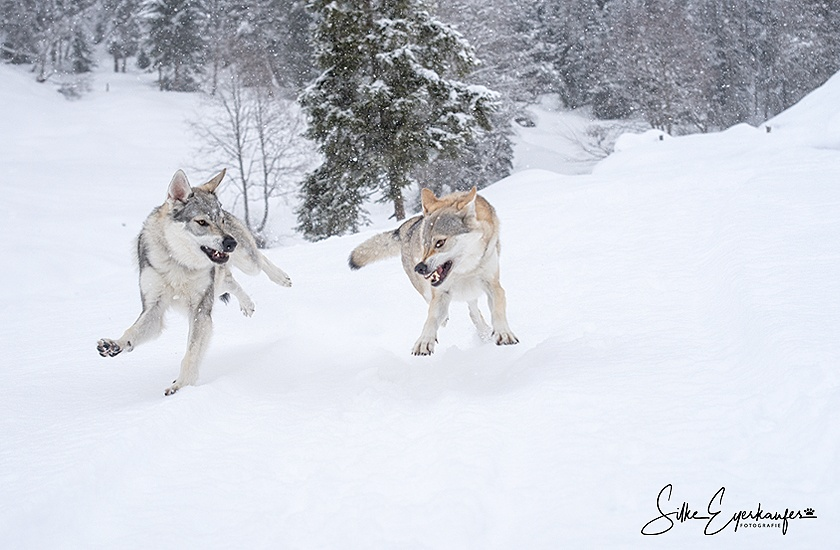 Winterurlaub in Kirchberg, Tirol – Winter vacation in Kirchberg, Tirol – Austria