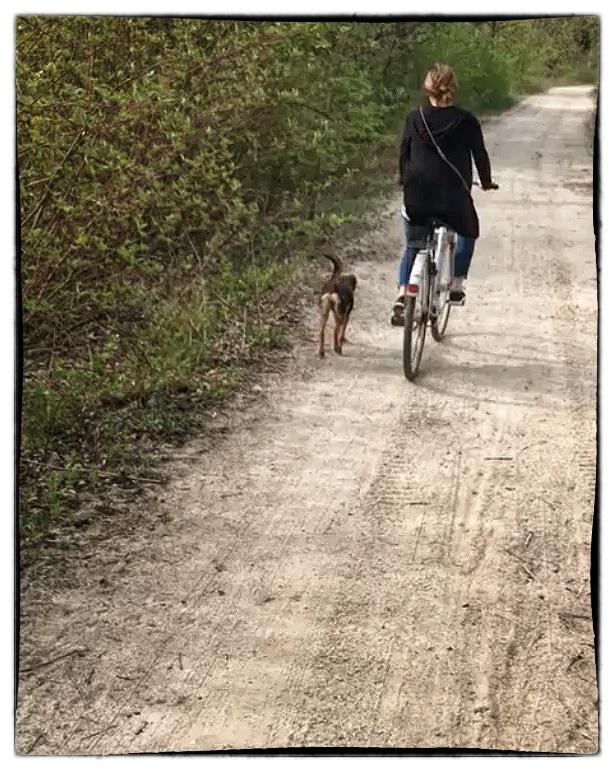 Paula – Welpe aus dem rumänischen Tierschutz – läuft am Rad :)