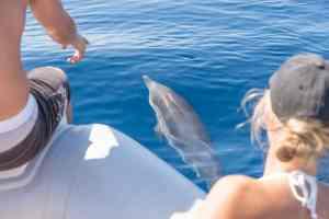 Video: Delfine im Korinthischen Meer – Griechenland, Attika :)