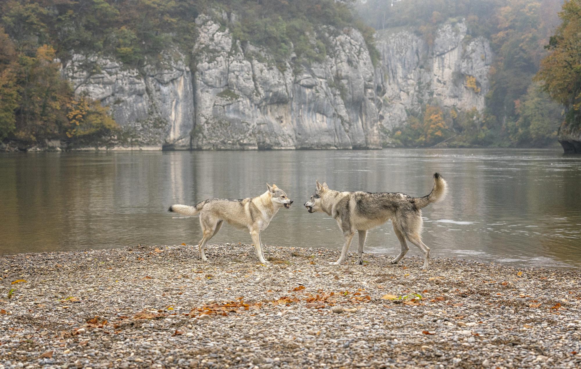 Herbst und zwei Tschechen im Donaudurchbruch :)