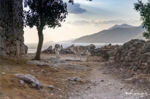 Aracho und Delphi unterwegs auf historischen Pfaden – Griechenland, Attika :)