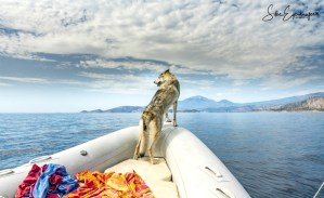 Delphi auf Abenteuertour im Korinthischem Meer :)
