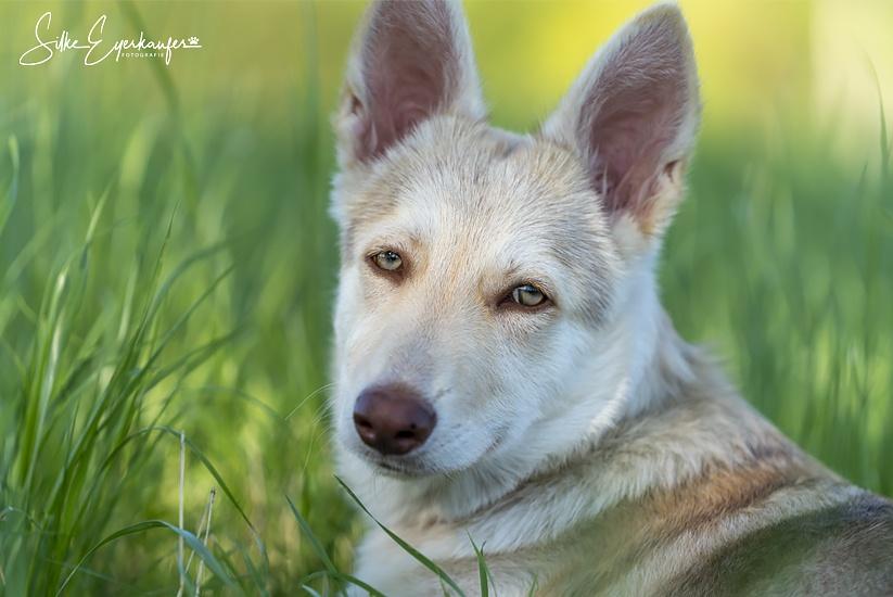 Beziehungstraining Mensch - Hund