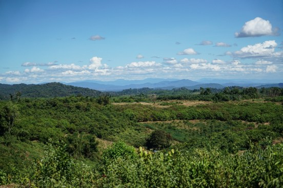 monoculture plantations and logging take away the forest of the tribe people
