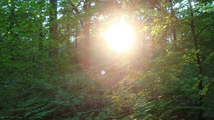 Forêt de L'isle Adam