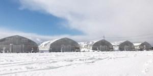 雪の中のイチゴハウス
