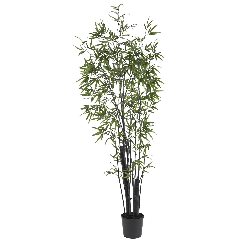 6 5 black bamboo