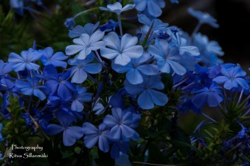 flowers (7 of 23)