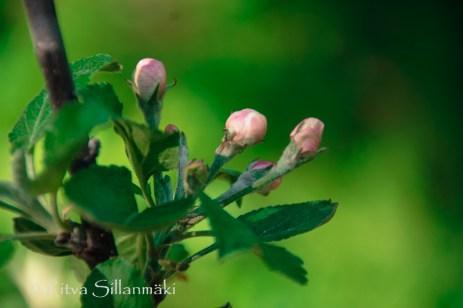wild flower- Ritva Sillanmäki (81 of 144)
