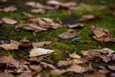 autumn (7 of 32)