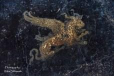 Pompeii (77 of 180)