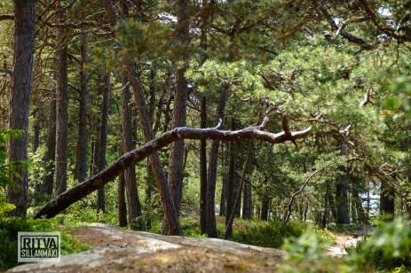 Porkkalanniemi-Finland-04653