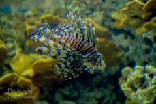 traslucent from Aquarium--11