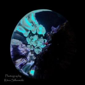 traslucent from Aquarium--17