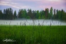 misty summer eve-13