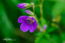 summer flowers (10 of 96)