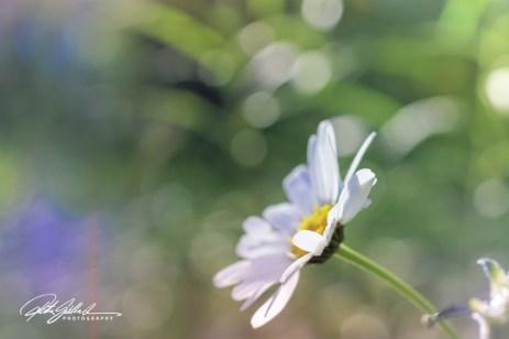summer flowers (146 of 207)