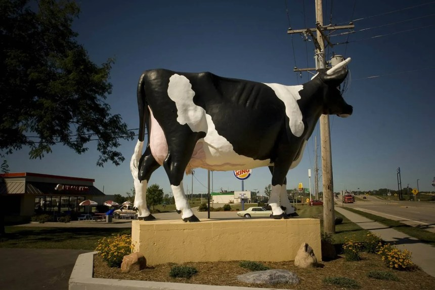 Sissy the Cow - a giant fiberglass cow - in DeForest, Wisconsin
